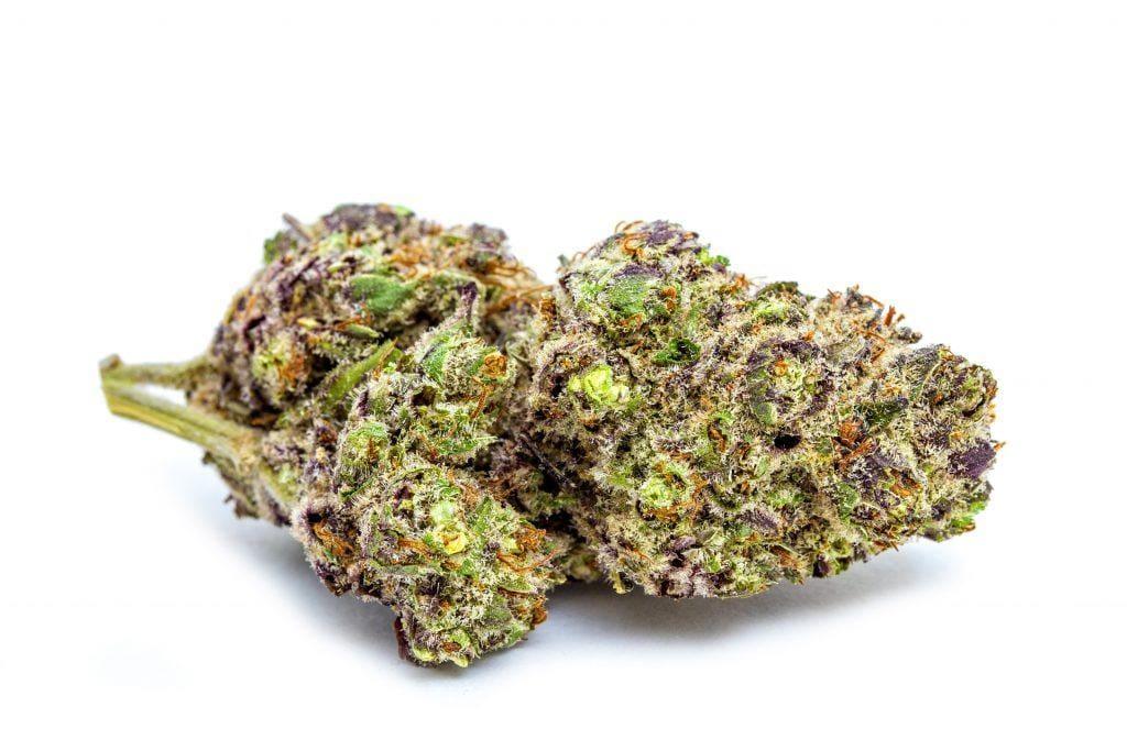 紫兰博麻(Purple Lamborghini)