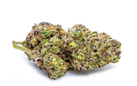 紫兰博麻(Purple Lamborghini)