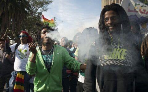 哪个国家拥有世界上最好的大麻?