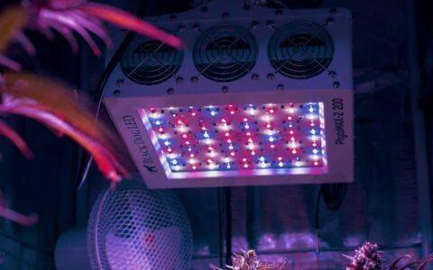 种植大麻所需灯光环境全解析