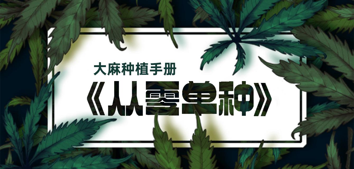 大麻种植手册《从零单种》