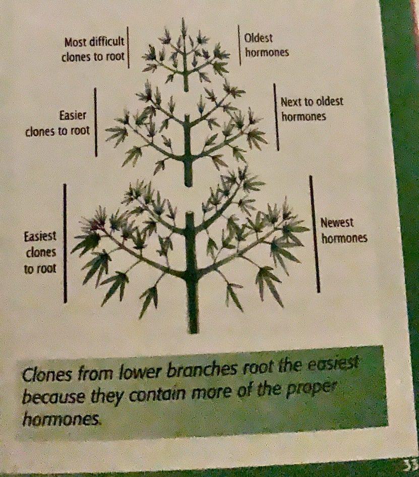 亚当推荐种植大麻权威书籍《大麻圣经》你值得拥有-种植大麻必备的科技产品系列