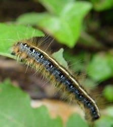 毛毛虫和菜青虫——从零单种(34)