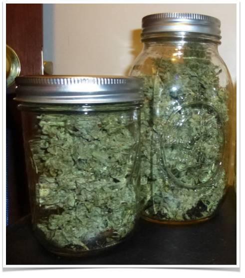 室内种植大麻的必要设施和工具(下)——从零单种(14)