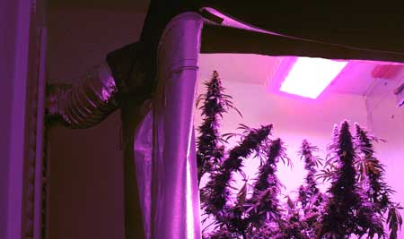 配置大麻种植灯(下)——从零单种17