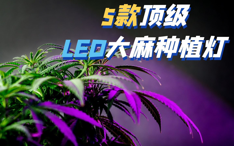 款顶级商业LED大麻种植灯推荐