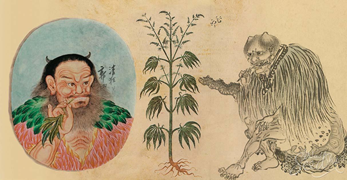 种植大麻肥料中的各类元素——从零单种(26)