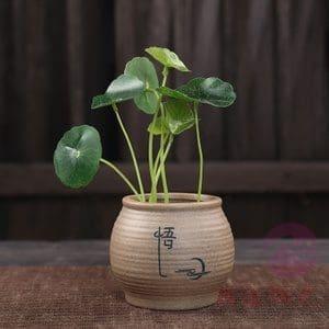 冲洗大麻植物——从零单种(11)