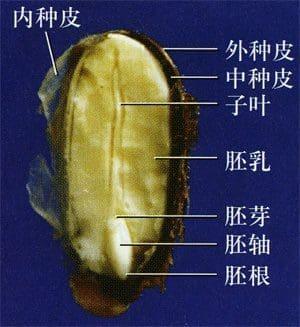 萌发种子和储存种子——从零单种(8)