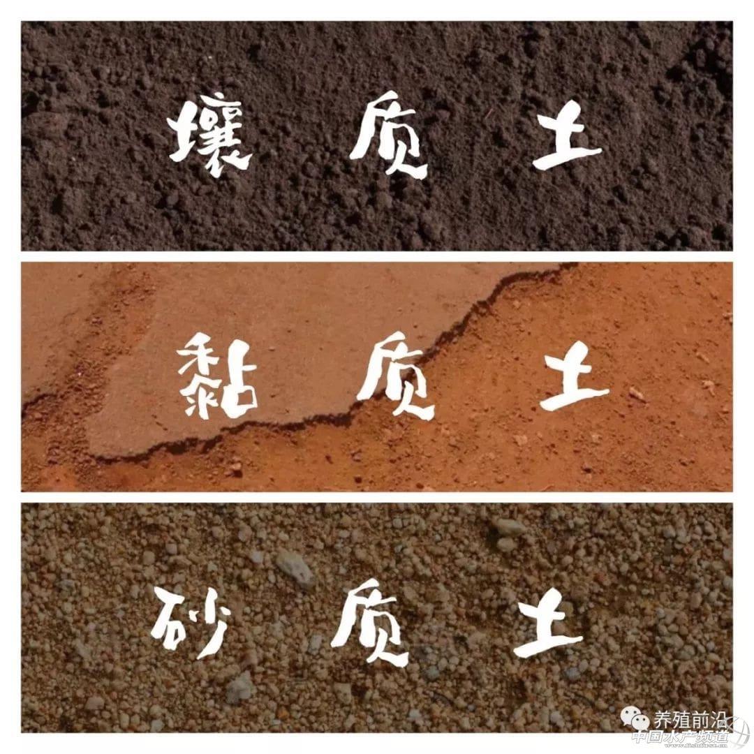 为移植种子准备盆和土——从零单种(9)