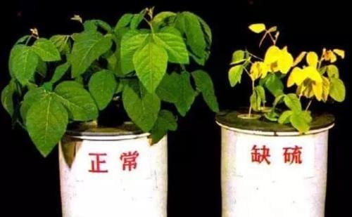 室内种植的土壤控制——从零单种(10)