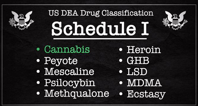 大麻的美国往事(四)